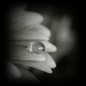 segni,dei,tempi,amore,comprensione,valutazione,riconoscimento,primavera,interiore.